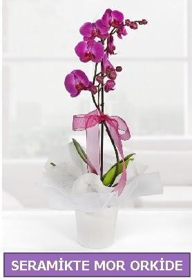 Seramik içerisinde birinci kalite tek dallı mor orkide  Burdur İnternetten çiçek siparişi