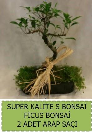 Ficus S Bonsai ve arap saçı  Burdur çiçekçi telefonları