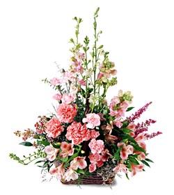 Burdur ucuz çiçek gönder  mevsim çiçeklerinden özel