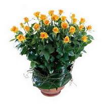 Burdur cicekciler , cicek siparisi  10 adet sari gül tanzim cam yada mika vazoda çiçek