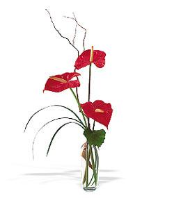 Burdur çiçek siparişi sitesi  cam yada mika Vazoda 3 adet  antoryum