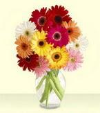 Burdur çiçek yolla , çiçek gönder , çiçekçi   cam yada mika vazoda 15 özel gerbera