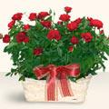 Burdur İnternetten çiçek siparişi  11 adet kirmizi gül sepette