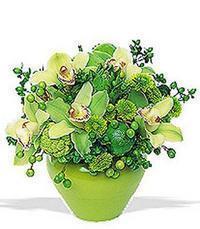 cam yada mika vazoda 5 adet orkide   Burdur online çiçekçi , çiçek siparişi