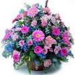 karisik mevsim kir çiçekleri  Burdur çiçek gönderme sitemiz güvenlidir