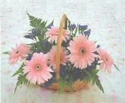 gerbera çiçeklerinde sepet   Burdur çiçek yolla