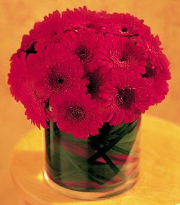 Burdur ucuz çiçek gönder  23 adet gerbera çiçegi sade ve sik cam içerisinde