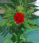 1 adet kirmizi gül buketi   Burdur çiçek siparişi vermek