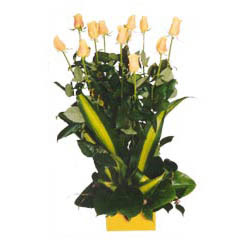 12 adet beyaz gül aranjmani  Burdur kaliteli taze ve ucuz çiçekler
