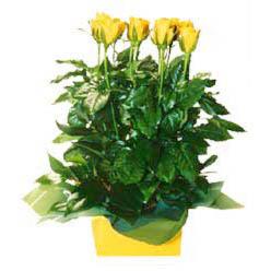 11 adet sari gül aranjmani  Burdur online çiçekçi , çiçek siparişi
