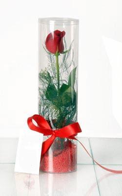 Burdur çiçek yolla  Silindir vazoda tek kirmizi gül
