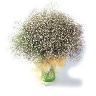 Burdur çiçek mağazası , çiçekçi adresleri  cam yada mika vazo içerisinde cipsofilya demeti
