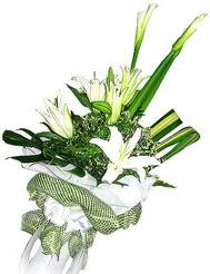 Burdur güvenli kaliteli hızlı çiçek  3 dal kazablanka çiçegi ve yesillikler