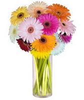 Burdur internetten çiçek siparişi  Farkli renklerde 15 adet gerbera çiçegi