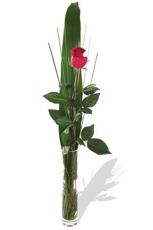 1 adet cam vazo içerisinde kirmizi gül  Burdur çiçek , çiçekçi , çiçekçilik