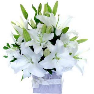 Burdur çiçek yolla  2 dal cazablanca vazo çiçeği