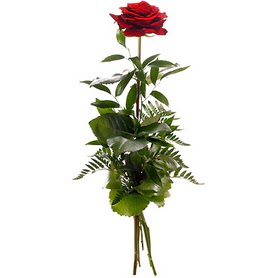 Burdur online çiçekçi , çiçek siparişi  1 adet kırmızı gülden buket