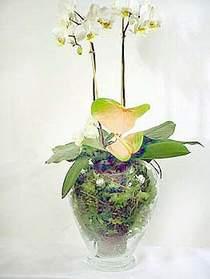 Burdur çiçek satışı  Cam yada mika vazoda özel orkideler