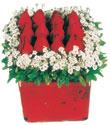 Burdur çiçek gönderme  Kare cam yada mika içinde kirmizi güller - anneler günü seçimi özel çiçek