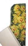Burdur çiçek gönderme  Kutu içerisine dal cymbidium orkide