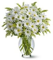 Vazo içerisinde beyaz krizantem çiçekleri  Burdur çiçekçi mağazası