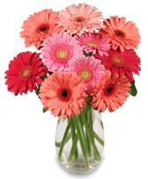 vazo içerisinde 13 adet gerbera çiçeği  Burdur çiçek siparişi sitesi