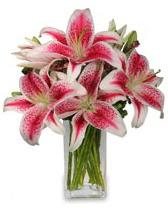Vazo içerisinde 5 dal kazablanka çiçeği  Burdur cicekciler , cicek siparisi