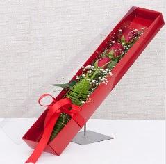 Kutu içerisinde 3 adet kırmızı gül  Burdur online çiçek gönderme sipariş