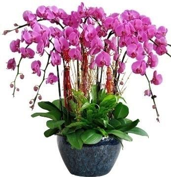 9 dallı mor orkide  Burdur 14 şubat sevgililer günü çiçek