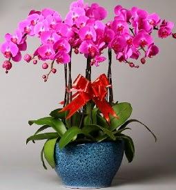 7 dallı mor orkide  Burdur çiçek online çiçek siparişi
