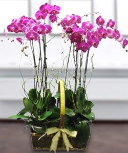4 dallı mor orkide  Burdur güvenli kaliteli hızlı çiçek