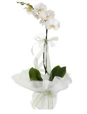 1 dal beyaz orkide çiçeği  Burdur çiçek siparişi vermek