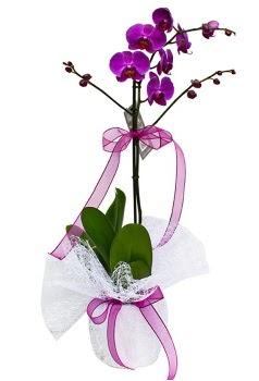 Tek dallı mor orkide  Burdur çiçekçi telefonları