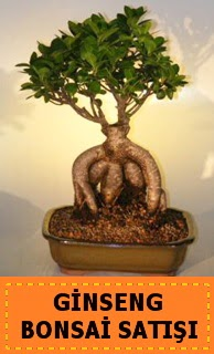 Ginseng bonsai satışı japon ağacı  Burdur cicek , cicekci