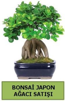 Bonsai japon ağacı satışı  Burdur çiçek satışı