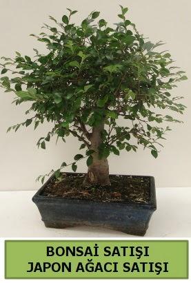 Minyatür bonsai japon ağacı satışı  Burdur çiçek gönderme sitemiz güvenlidir
