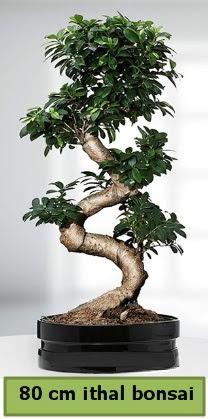80 cm özel saksıda bonsai bitkisi  Burdur çiçekçi telefonları