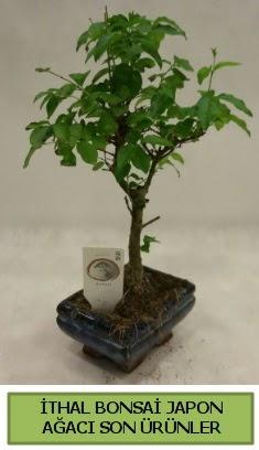 İthal bonsai japon ağacı bitkisi  Burdur hediye sevgilime hediye çiçek