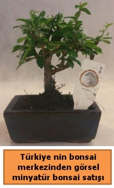 Japon ağacı bonsai satışı ithal görsel  Burdur çiçek yolla