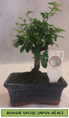 Minyatür bonsai ağacı satışı  Burdur çiçek gönderme