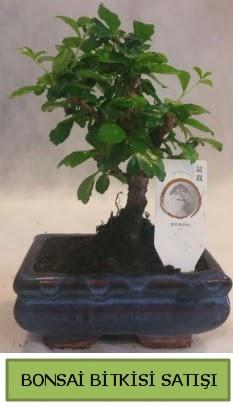 Bonsai ithal görsel minyatür japon ağacı  Burdur ucuz çiçek gönder