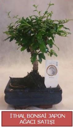 İthal küçük boy minyatür bonsai ağaç bitkisi  Burdur çiçekçi telefonları