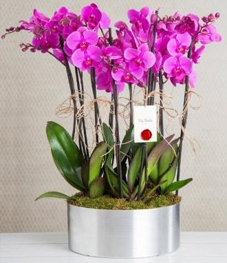 11 dallı mor orkide metal vazoda  Burdur çiçek gönderme sitemiz güvenlidir