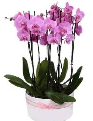 Beyaz seramik içerisinde 7 dallı mor orkide  Burdur çiçekçi telefonları