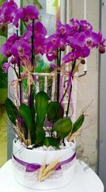 Seramik vazoda 4 dallı mor lila orkide  Burdur online çiçek gönderme sipariş