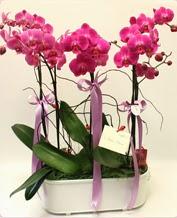Beyaz seramik içerisinde 4 dallı orkide  Burdur ucuz çiçek gönder