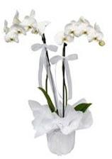 2 dallı beyaz orkide  Burdur güvenli kaliteli hızlı çiçek