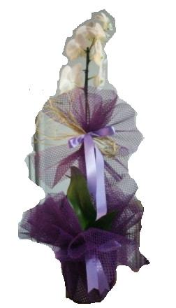 Tek dallı beyaz orkide süper kalite ithal  Burdur çiçek siparişi sitesi