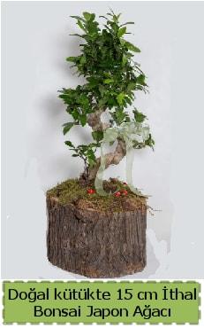 Doğal kütükte İthal bonsai japon ağacı  Burdur çiçek gönderme