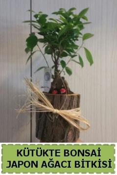 Kütük içerisinde doğal bonsai ağacı  Burdur çiçekçi telefonları